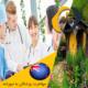 مهاجرت پزشکان به نیوزلند